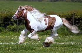 Картинки по запросу породистые лошади