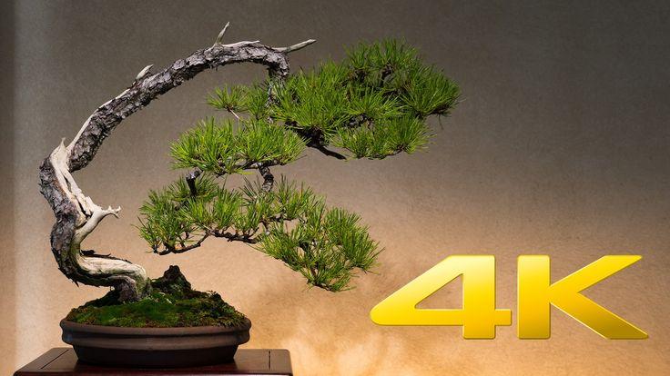 Saitama Omiya Bonsai Museum - 大宮盆栽美術館 - 4K Ultra HD
