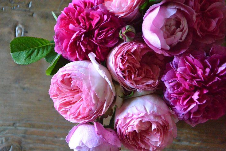 rose#colourpower#parfume#pink#roseantiche#cabiancadellabbadessa.it
