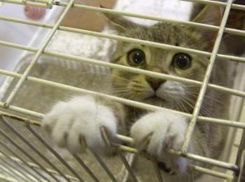 Een kat word ongeveer 14 á 16 jaar. Een kat kost ongeveer 25-30 euro per maand. De kosten zijn in begin hoger door éénmalige aanschaf van benodigdheden.
