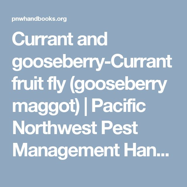 Currant and gooseberry-Currant fruit fly (gooseberry maggot)   Pacific Northwest Pest Management Handbooks