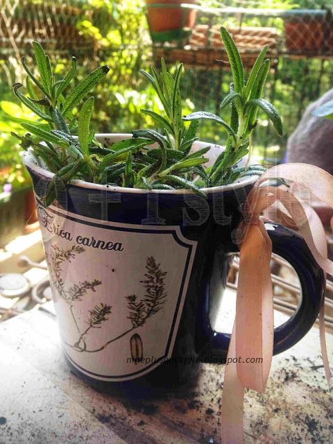 Una tazza aromatica - An aromatic mug