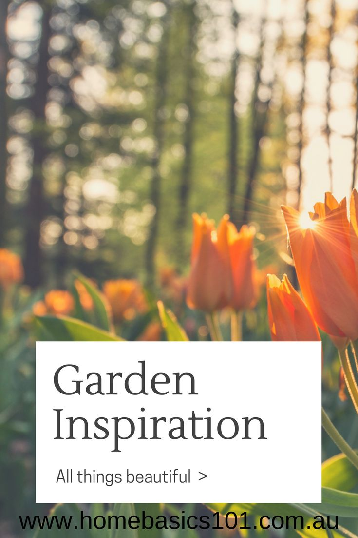No Fuss, Easy to follow tips to gardening