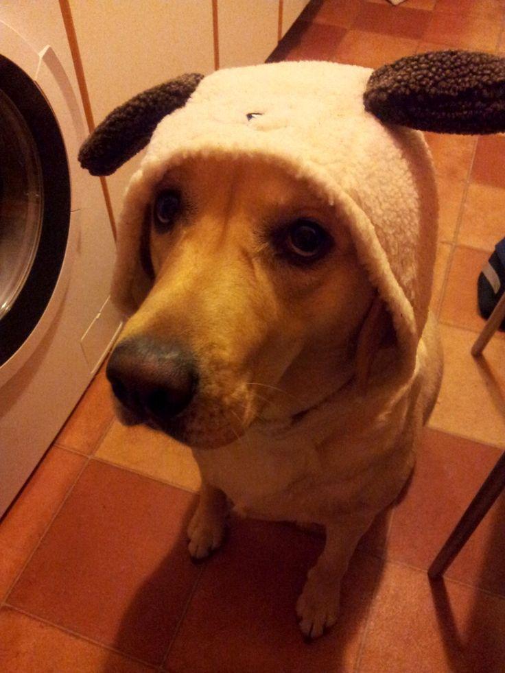 Labrador Retriever Kessy Brrrrr – es ist so kalt… Wann kommt der Sommer? ☀ Hundename: Kessy / Rasse: Labrador Retriever      Mehr Fotos: https://magazin.dogs-2-love.com/foto/labrador-retriever-kessy-2/ Foto, Hund, Sommer, Winter