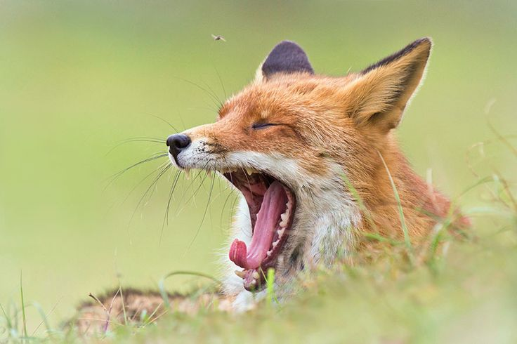 1Kviews  12 hours ago by​ James Gould-Bourn  Joke Hulst is a Dutch Photographer who captures the everyday lives of foxes in beautifully intimate photographs. Based Amsterdam, Netherlands, Hulst's pictures have been viewed almost half a million times on 500px, and it's easy to see why when you take a look at the photographs below.