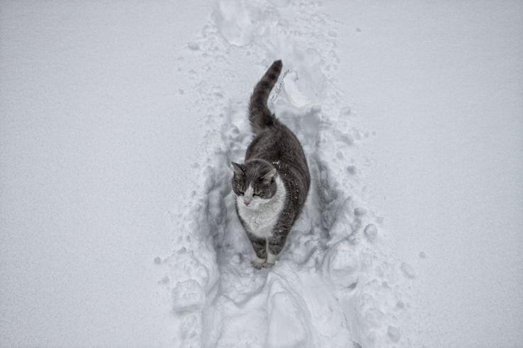 Mardi - the snowcat