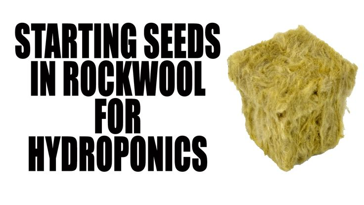This is how I prepare my rockwool cubes and plant my seed to start my seedlings for my hydroponic system. ---------------------------------------------------...