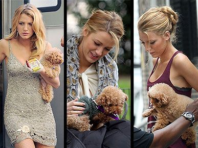 Carrie Underwood, Blake Lively Dog Pictures - Dog-Walking Style : People.com
