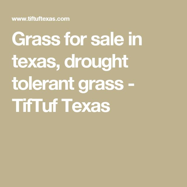Grass for sale in texas, drought tolerant grass - TifTuf Texas