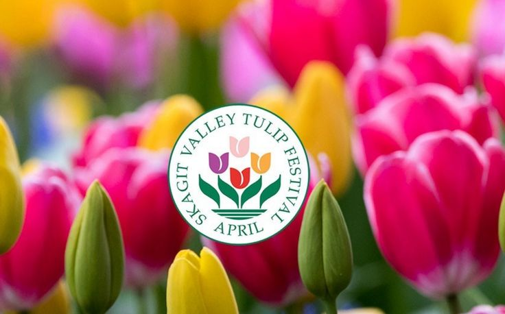 Skagit Valley Tulip Festival runs April 1 - 30, 2017 and features spectacular fields of blooming tulips and daffodils. See the interactive or printable map. The free Tulip Festival Street Fair is April 21 to 23 in Mount Vernon.  http://www.tulipfestival.org/ #DonSchumacher #donshomes #realestate #realtor