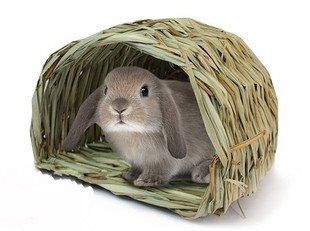 Cold weather is on its way. Please ensure your buns are well wrapped up A FUR COAT IS NOT ENOUGH. Cover hutches at night, bed with straw which traps air better than hay. Here is the RWAF's advice for keeping bunnies toasty warm in winter  http://www.rabbitwelfare.co.uk/pdfs/RWAFtoptipsforwintercare.pdfp