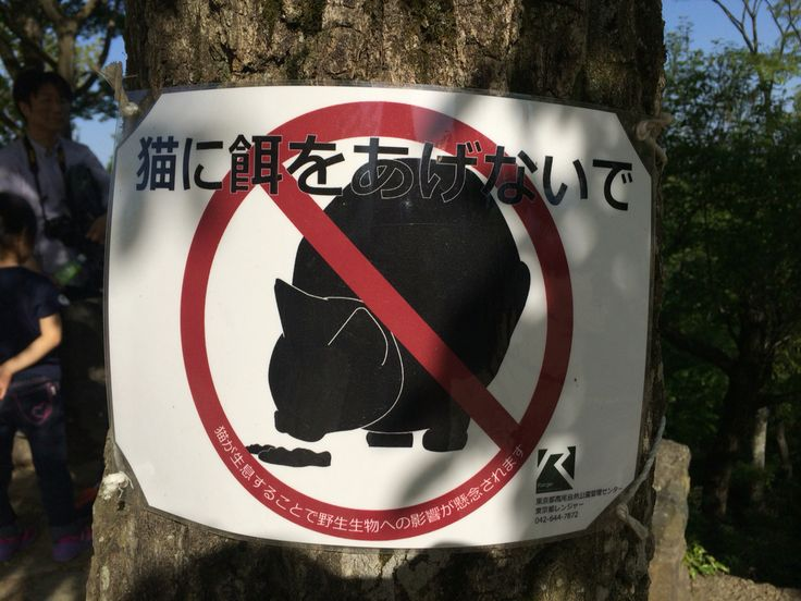 Is it sign for cats that they can't eat?