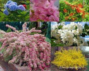 Самые красивые цветущие кустарники. / The most beautiful flowering shrubs.