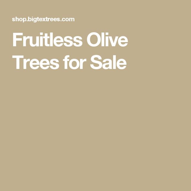Fruitless Olive Trees for Sale