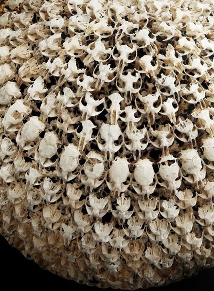 """Alastair Mackie. In his exhibition """"I was there in Arcadia"""" he shows four spherical bone sculptures displayed under glass. The spheres are composed of hundreds of intricately connected mouse skulls. The bones had been collected from 'regurgitated barn owl pellets' found around the artist's family farm. Mackie also photographs the completed spheres in situ, at the place where he found the skulls."""