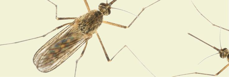 Tick and Mosquito Diseases to Watch This Season - Consumer Reports
