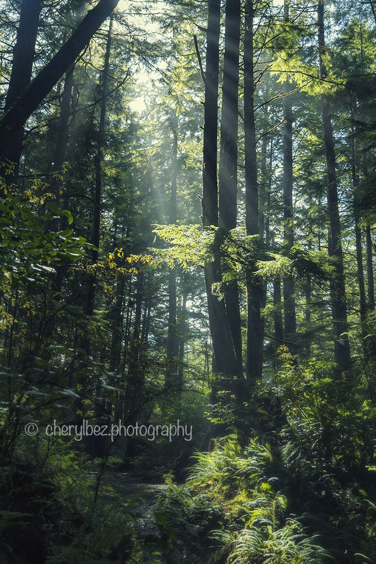 Light in the Forest - an inspiration-filled photo of sunbeams penetrating the canopy of thick forest, illuminating the path through the undergrowth. ©cherylbez.photography