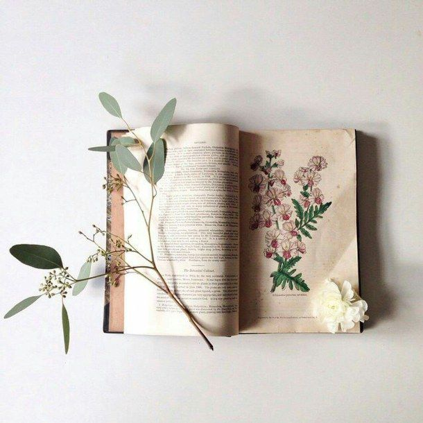 красиво, книга, книги, цветы, хипстер, инди, мелочи, идеально, фото, фотография