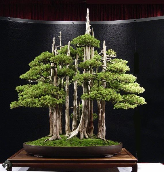 "Goshin (""protector of the spirit"") is a bonsai created by John Y. Naka. It is a forest planting of eleven Foemina Junipers, the earliest of which Naka began training into bonsai in 1948. Naka donated it to the National Bonsai Foundation in 1984, to be displayed at the United States National Arboretum; it has been there ever since. The tree is posted in our Top Bonsai gallery."