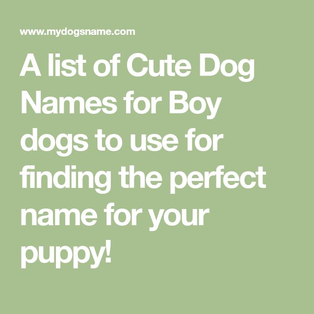 A list of Cute Dog Names for Boy dogs to use for finding the perfect name for your puppy!