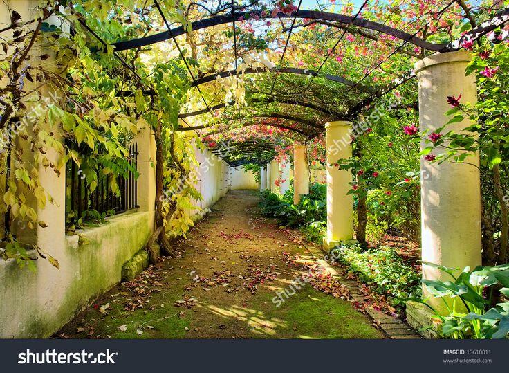 Autumnal arch covered by vine.Shot in Vergelegen wine farm/estate, near Stellenbosch, Western Cape, South Africa.