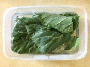 How to store collards and other greens long-term for bearded dragons.
