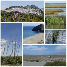 Amazingly wide variety - mountain ranges, desert, tidal marshes, ancient oak forests, beaches and cliffs.