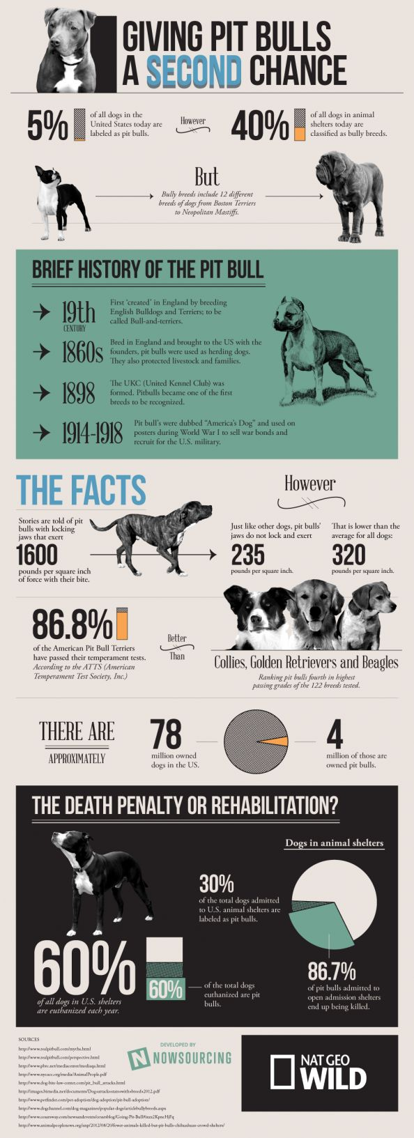 Giving Pit Bulls a Second Chance #dogs  #pitbulls #infographics