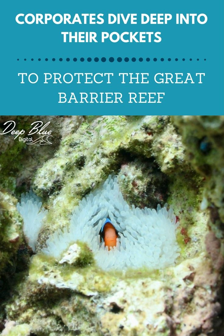 """For the first time since 2014, the far reaches of the unexplored areas of the Great Barrier Reef will be explored and studied by the """"Search for the Corals Expedition"""". A project conceived by Australian organisation Great Barrier Reef Legacy (GBRL) and funded under the generous public donations, Northern Escape Collections, project partners and small business champions, this project is making it possible for this important scientific research to be collected."""
