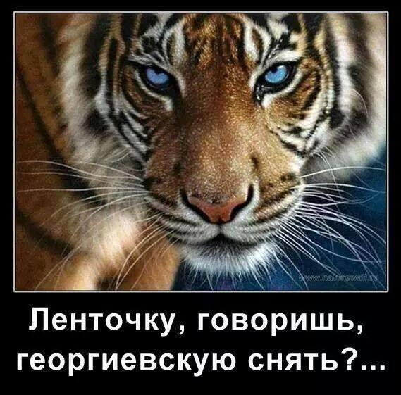 Gallery.ru / Фото #3 - С болью и радостью в сердце! - Ka