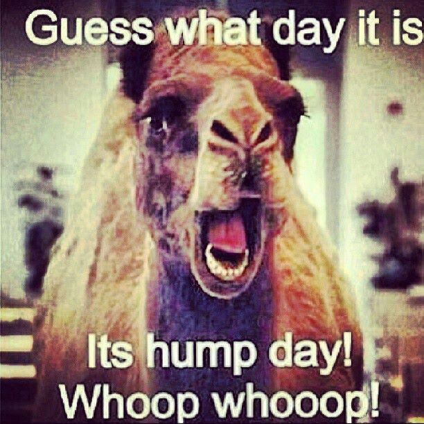 Geico Saved Quote: 1000+ Ideas About Hump Day Commercial On Pinterest