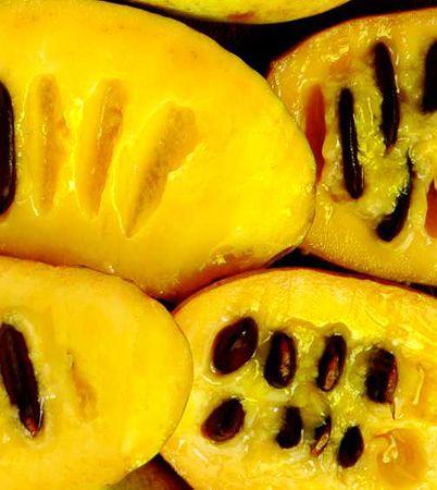 asiminier fruit pulpe jaune