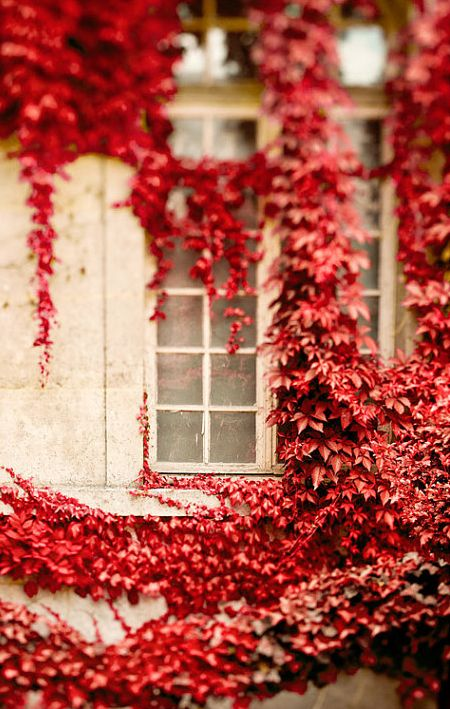 rust red leaves ....