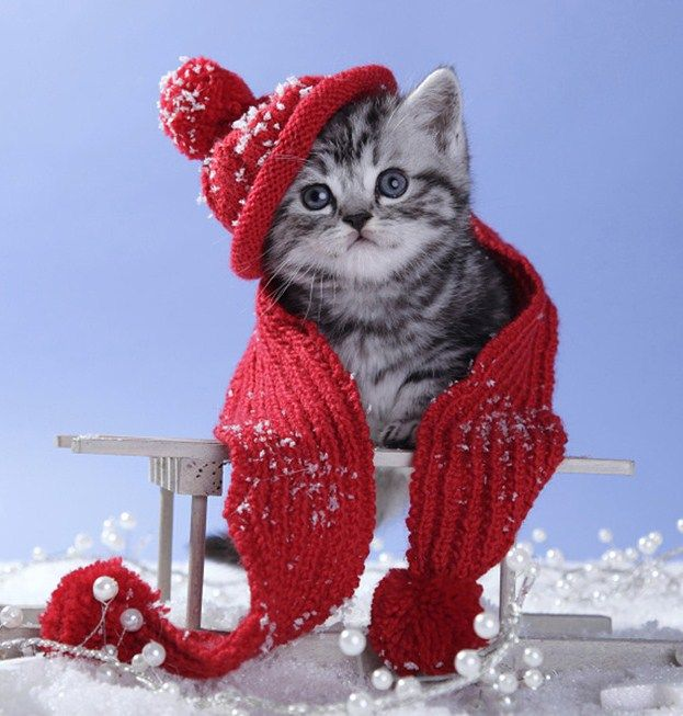 ... Cats Christmas Cats on Pinterest | Christmas trees, Cute cats and