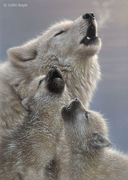Howling lessons from Mom