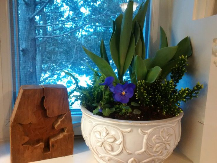 Heather, Pansy, minature Fern and Tulips....fill up this pretty pot