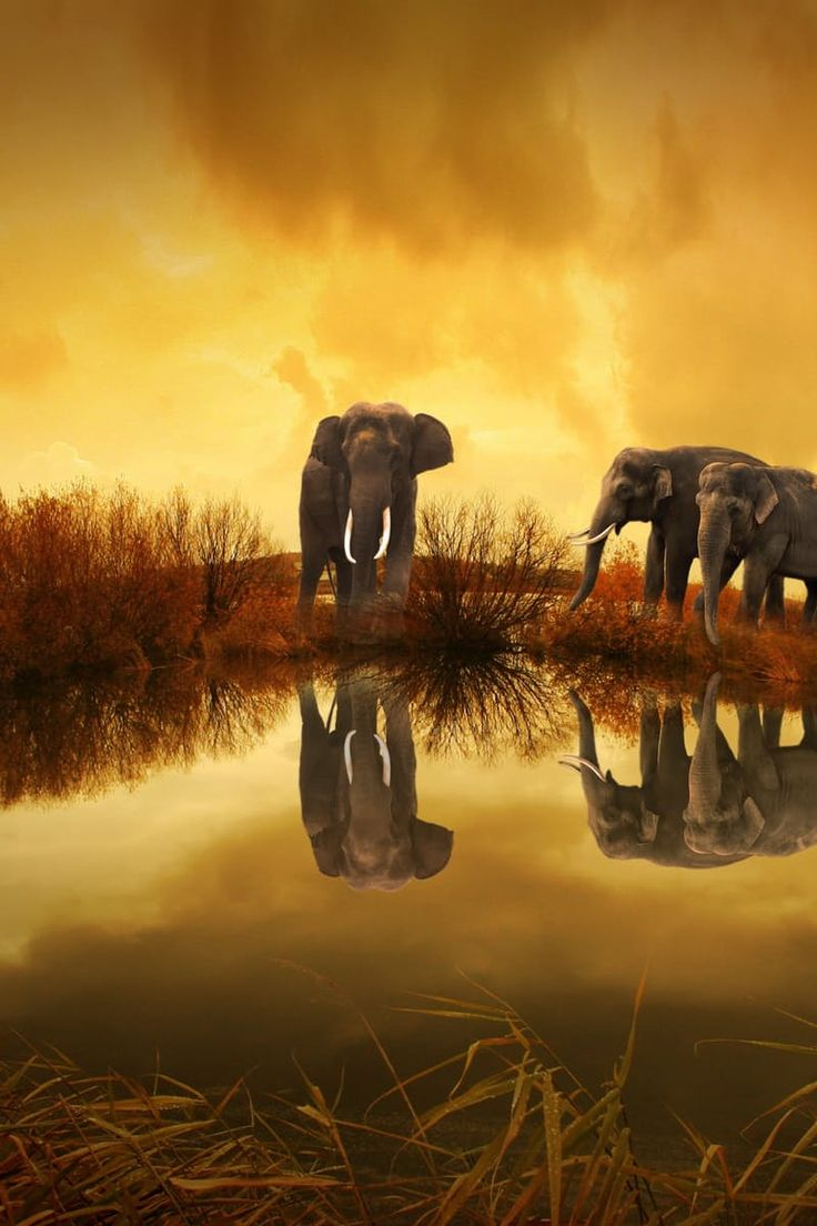 3 Grey Elephants Under Yellow Sky                                                                                                                                                                                 More