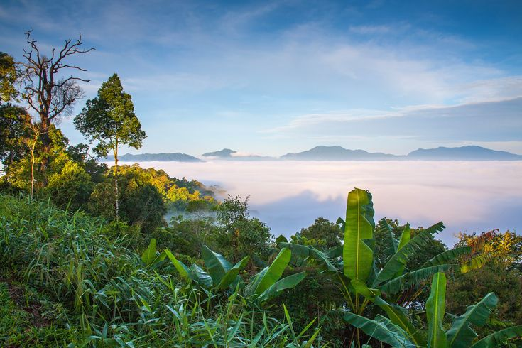 Thailand has over 140 national parks, covering almost 20 percent of the kindom's territory. To help you plan your trip …