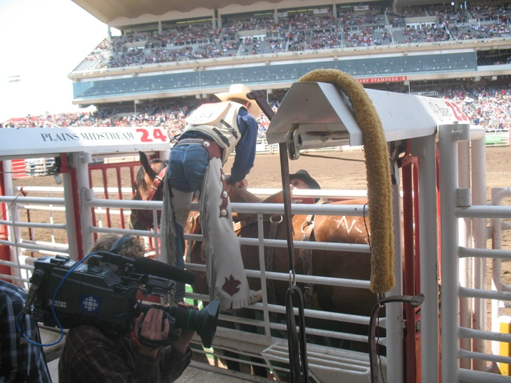 Cowboy getting ready for his ride at the Calgary Stampede (view from behind the chutes toward the Grandstand). More Stampede info at http://Calgary.FoundLocally.com/entertainment/fest-  stampede.htm