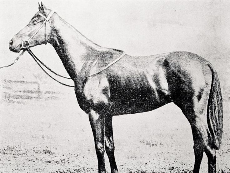 1916 Sasanof Melbourne Cup