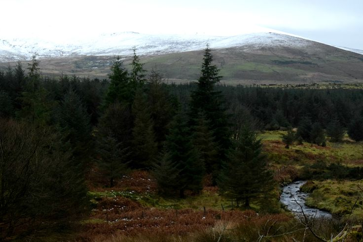 Beautiful nature at the Glen of Immal in Wicklow Ireland