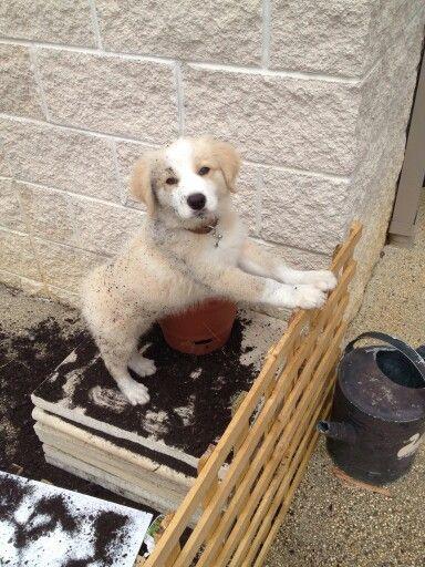 Gardening time.