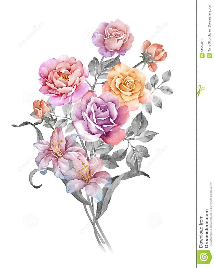 watercolor-illustration-flower-set-simple-white-background-51532658.jpg (1043×1300)