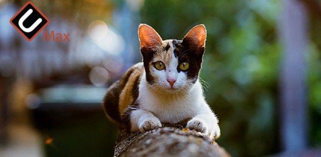 How Long Do Cats Live How Long Do Tabby Cats Live Urdu Max Howlongdocatsliveathome Howlongdocatsliveohgod Howlongdotabbycatslive Tabby Cat Cats Cat Ages