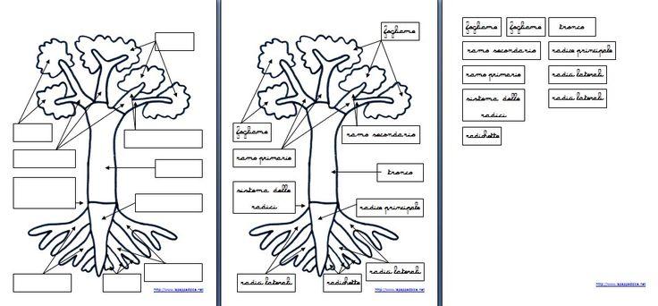 """Botanica Montessori: l'incastro della pianta.Presentazione ed esercizi per bambini a partire dai 3 ai 5anni. L'incastro utilizzato per la presentazioni è offerto da : __________________ Materiale: – incastrodella pianta Presentazione (individuale) – diciamo al bambino:""""Ricordi che abbiamo parlato delle parti…"""