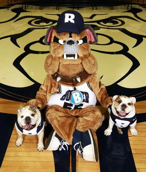 17 Best Images About My Butler Bulldogs On Pinterest
