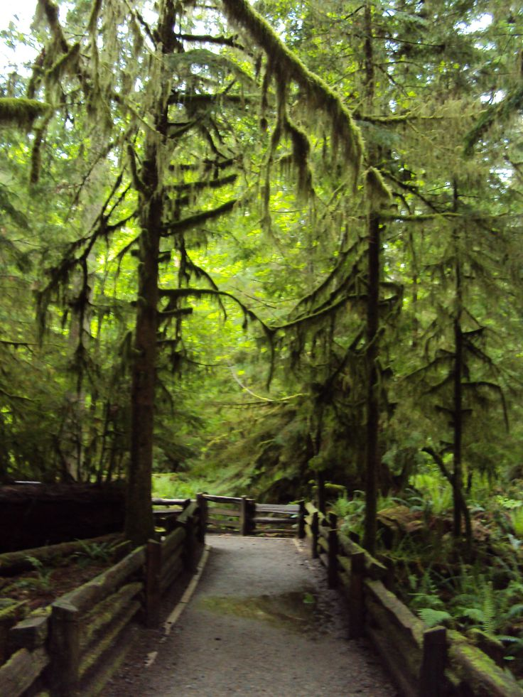 Cathedral Grove, Vancouver Island. Easy stop at the side of the road.
