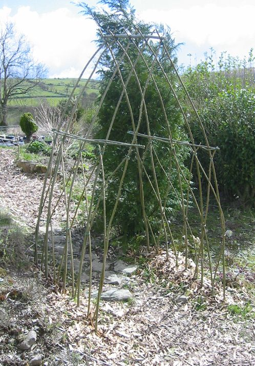 living willow - Google Search