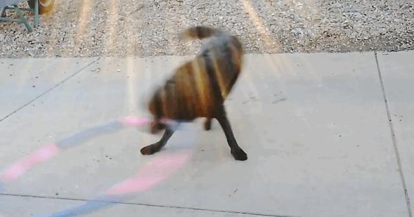 My dog loves to hoola hoop - Album on Imgur