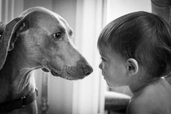 Brooke Wedlock - Family Time #babyportraits #babyboy #portrait #familyphotographer #familyportraits #torontophotographer #naturallight #newfriends #toddler #lifestyle #dog